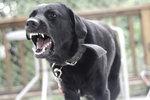 Muž bránil svého psa: Skončil s krvavými kousanci, majitel útočícího zvířete se vypařil