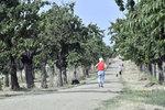 Třešňovka v novém: Zmizeli bezdomovci a odpadky, má stovky nových stromů