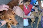 Péče o pražské psí bezdomovce: K očkování dostali i čip, aby se nezaběhli