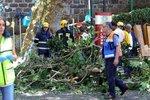 Oslavy svátku Panny Marie skončily tragicky. Strom na Madeiře zabil deset lidí