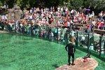Nabitý víkend v Zoo Praha. Oslaví se dny slonů a lvů, koná se i lachtaní program