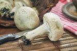 Sbíráte houby? Pozor na jedovaté žampiony!