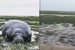 Hurikán Irma »vysál« vodu z oceánu: Odliv uvěznil mořské živočichy na mělčině