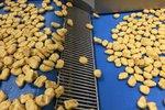 Kuřecí nugety pro McDonald's v Česku chrlí továrna v Maďarsku. Nahlédněte tam