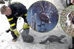 Kuny, labuť i pes Ervín: Všichni čekali na hasiče, až je zachrání
