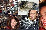 Štědrý den slavných: Vojtkova katastrofa, sexy Němcová a Trojanové kočka ve stromečku