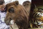 Únor v pražské zoo tak trochu jinak: Nakrmte velbloudy a vydejte se za zvířaty, která v noci ožívají