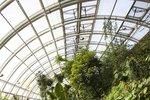 Léto v botanické zahradě: Nabídne kulinářské dobroty z Afriky i včelí výstavu