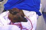 Muž (54) rozmlátil byt své přítelkyně z Příbrami: Nakonec jí brutálně zabil psa!