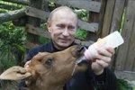 Putin za svou fyzičku vděčí jelení krvi. Prý se v ní koupe a pije ji