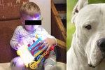 Vlastíka (†1) zabil doma rodinný pes: Ten kluk ho pořád otravoval, tvrdil majitel u soudu