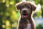 Máte doma psího kamaráda, kterého rádi fotíte? Pak na nic nečekejte a přihlaste jej do soutěže nejPes 2018! Čekají vás cena za celkem 100 tisíc korun, a to je pádný důvod, proč soutěžit! Startujeme už dnes!