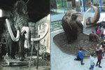 Brněnský mamut slaví 90. narozeniny: První model zničila Rudá armáda, druhý podpálili filmaři