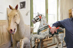 Nejdřív zubař, teď kožní operace! 125leté koně z letenského kolotoče mají v péči restaurátoři