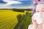 Trápí vás alergie? 4 rady, jak jí nedat šanci a ulehčit si trápení