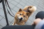 Adopce psů i základy správné výchovy: Praha 2 pořádá psí den