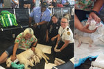 Porod osmerčat uprostřed letiště: Vodicí fenka přivedla na svět zdravá štěňátka