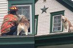 Dojemné foto! Šťastný pejsek dal pusu hasiči, který ho zachránil ze střechy