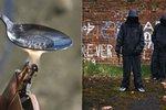 Drogový gang si udělal kurýra ze školáka: Pokusil se oběsit ze strachu z dealerů