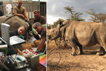 Vyrobili jsme nosorožce! Čeští vědci se podíleli na zmrtvýchvstání vyhynulého druhu