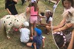 Děti pomalovaly nebohého poníka. Neskutečné týrání zvířete, hřmí lidé na Facebooku