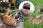 Popravoval a zpracovával šelmy na lektvary. Miloš Hrozínek (35) byl odsouzen i za pytlačení. Před tygry lovil muflony