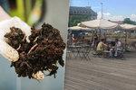 """Jak přijít levně k hnojivu? Na Vítězném náměstí vás naučí vyrábět si vlastní """"žížalí čaj"""""""