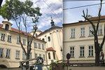 """Pražané se čílí. V Letenské ulici """"zprznili"""" dřevorubci jediný strom, který tam roste"""