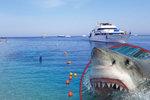 Hon na žraloka pokračuje. Smrt Petra (†42) Čechy od dovolené v Egyptě neodradila