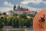 "V Praze je takový hic, že ""odpadla"" i klíšťata! Bude jich víc na podzim?"