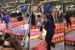 Běsnící velbloud v cirkuse zranil šest dětí a jednoho dospělého. Vyděsila ho rána lopatou.