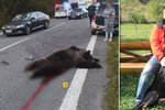 Juraj (†44) zemřel při cestě do práce. Příčinou byl medvěd přecházející silnici