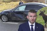 Slovenský premiér skončil v nemocnici. Do auta mu během jízdy narazil jelen