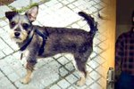 Uštěkaného psa zabil smetákem, pak řekl, že toho nelituje: Muži ze Zlína hrozí tři roky za týrání