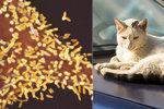 Muž zemřel na vzteklinu, pokousala ho kočka: Ke smrtelné nákaze stačí i olíznutí