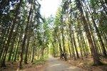 Výpravy do lesa, za zvířaty i rostlinami: V Praze začínají Dny stromů