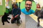 Psi rozpoznají rakovinu dřív než přístroj, říká český vědec. Přehnané, diví se onkologové