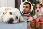 """Pražský veterinář o """"psích Vánocích"""": Jak přilepšit svým čtyřnohým miláčkům, a nezničit jim zdraví?"""