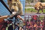 Tak trochu jiná »zoo«: Namísto zvířat jsou v kleci lidi!