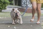 Jaký pán, takový pes! Proč mají obézní lidé zvířecí mazlíčky s nadváhou?