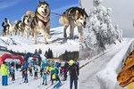 Tipy na víkend: Nová stezka v korunách stromů, závody na běžkách a lyžích i návrat dinosaurů