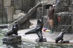 S příchodem jara vstoupila pražská zoo do nové sezony: Které nové přírůstky v ní potkáte?