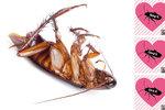 Pojmenujte švába podle svého expartnera, vyzvala zoo. Zájem byl obrovský