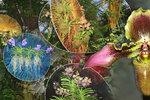 Koktejl barev ze všech koutů světa: Exotická výstava orchidejí v Praze otevírá brány