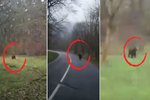 U Frýdku běhá zmatená medvědice, kličkuje před auty a děsí místní. Nesmíte utíkat, varuje expert