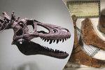 Muž prodává na internetu mladého tyrannosaura: Cenovka vám vyrazí dech!
