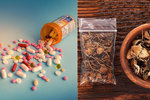 Revoluce v medicíně? Antidepresiva může nahradit léčba lysohlávkami, tvrdí lékař