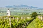 Za červeným vínem vyrazte do okolí Velkých Pavlovic!