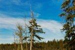 Kladské rašeliny patří k nejkrásnějším místům Slavkovského lesa.