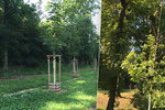 """""""Stres"""" zabíjí stromky ve Stromovce: Způsobuje jim ho sucho i škůdci"""